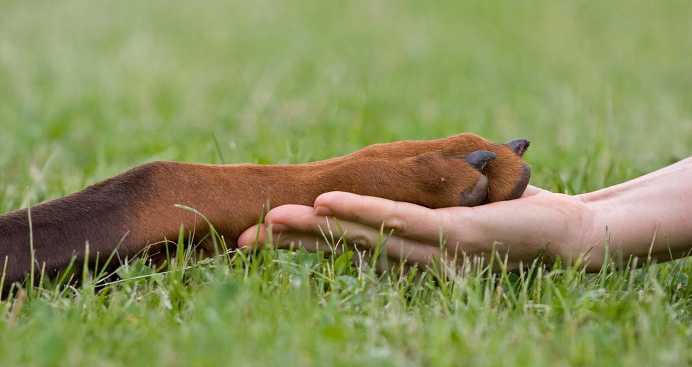 hand holding dog's paw